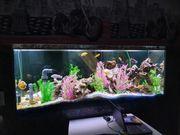 Aquarium komplett mit Technik und