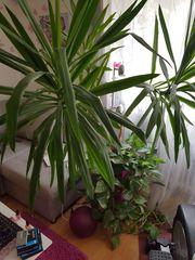 Palme zu verkaufen