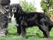 GUGO - idealer Familienhund lieb brav