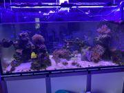 Meerwasser Aquarium 120x60x60 komplett mit