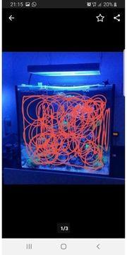 Meerwasser Aquarium 75x75x70