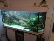 Aquarium 150cm mit Zubehör