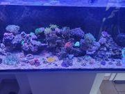 gestein keine fische oder korallen