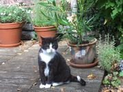Katzenbetreuung zuhause ohne Streß