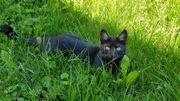 Katze sucht neues Zuhause mit
