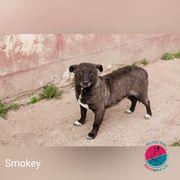 Smoky - Ihre Augen wollen wieder