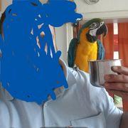 Ara papagei Henne mit alle