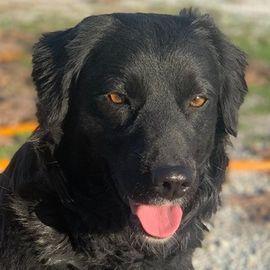 Bellona, geb. ca. 02/2019, lebt in GRIECHENLAND, im städt. Tierheim Serres