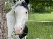 Ponys suchen Reit- Pflegebeteiligung