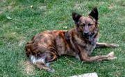 Nora - Hündin aus dem Tierschutz -
