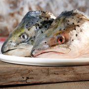 BARF Ganze Lachsköpfe vom Norwegischen