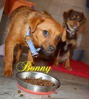 Bonny auf Pflegestelle in Schwedelbach