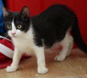 Figaro wünscht sich ein liebes