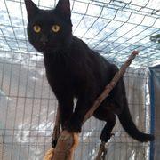 Merlin Kater aus dem Tierschutz