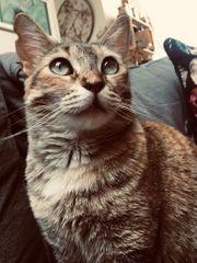 Wunderhübsche Katzendame sucht neues Zuhause