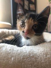 Baby Katze Suse 12 Wochen