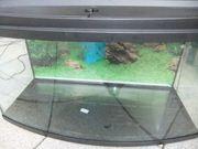 Eheim Aquarium mit gebogener Frontscheibe