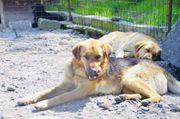 Akeo aus dem Tierschutz sucht