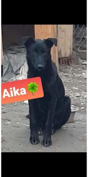 Wer gibt Aika eine Chance