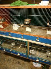 Zuchtboxen Leichtbau Eigenbau