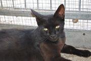 FORMENTERA - Liebes Katzenmädchen sucht Kuschelplatz