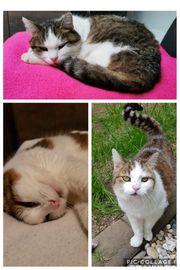 Katze Luna Mannheim-Lindenhof schmerzlich vermisst