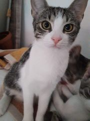 Katze Lissy sucht ein schönes
