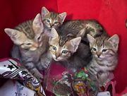 Katzenbabys in gute Hände abzugeben