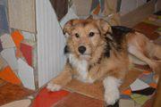 Hundemädchen Stella sucht ein tolles