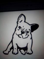 Suche ab April Französische Bulldogge