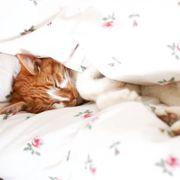 Katzenbrüder suchen ein Zuhause mit