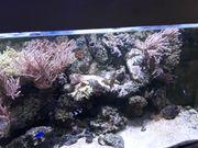 Meerwassersteine