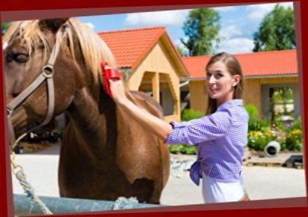 Ich mag Pferde und liebe