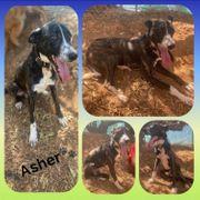 Hübscher lieber Asher 2 Jahre