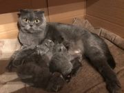 Kittenbabys