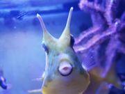 Verk Meerwasseraquarium Becken 500 Liter