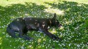 Liebevolle Hundebetreuung