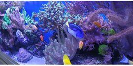 Bild 4 - Meerwasseraquarium EHEIM Inspiria Marine mit - Northeim