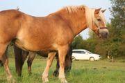 Ein Herz für Tiere - Blutegeltherapie