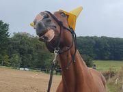 Pferd sucht Mensch - Spaß garantiert