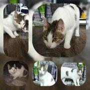 Katze und Kater suchen ein
