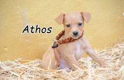 Athos möchte Groß und Stark