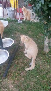 Katzenbaby zu verkaufen