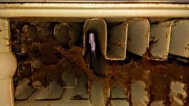 Fenster putzen Heizung Heizkörper reinigen: Kleinanzeigen aus Neuengönna - Rubrik Dienstleistungen, Service gewerblich