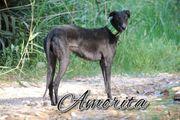 Schenken Sie Amorita eine Für-Immer-Familie