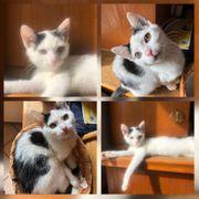 Baby Katze Kitten Frieda geimpft