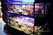 Meeresaquarium zwei mal 400 Liter