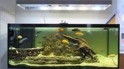 Aquarium 150x60x60cm mit Technik und
