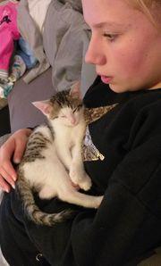 Super süße Baby Katze zu