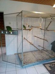 XXL Voliere Papageien Vögel Ara